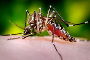 Dengue Fever Vaccine Coming.