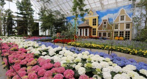 Beautiful Blooms In Buriram Resort
