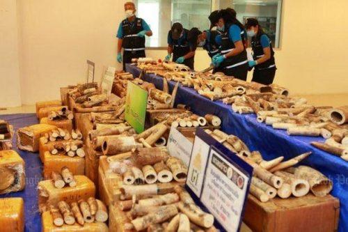 Malawi Ivory Seized At Suvarnabhumi Airport