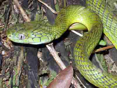 June May Be Over But Still Be Aware Of The Risks Of Snake Bite