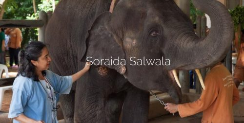 Elephant Foundation Creator Resigns Her Position