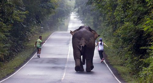 "Runners In Narrow Escape As They Try To Take ""Selfies"" With Wild Elephant"