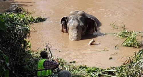 Villagers Try To Rescue Young Elephant Stuck In Canal