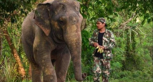 Humans Must Learn To Live With Wild Elephants Expert Warns