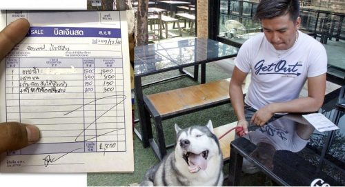 Dog Owner Taken Aback By Bill For Washing And Grooming Siberian Husky