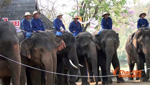 Thailand Celebrates National Elephant Day