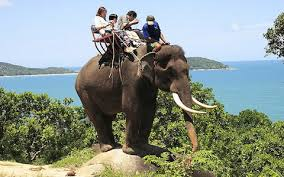 New Zealand Urges Tourists To Avoid Riding Elephants