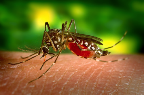 Dengue Fever Cases Over 50,000 In 2018