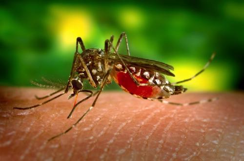 Dengue Fever Cases Over 50,000 In 2018