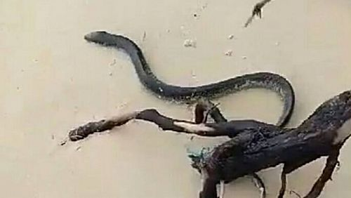 Sea Snake Warnings On Phuket Beaches