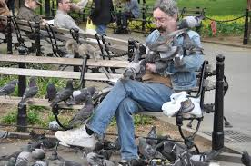 Let's Take Pigeon Control Seriously And Do So Immediately