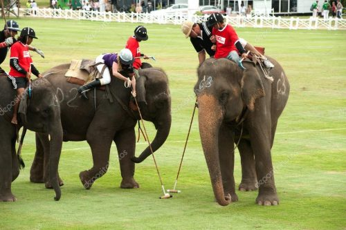 On World Animal Day, It's Time To End Elephant Polo
