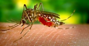 Dengue Fever: Fears Of Epidemic As Four Times As Many Cases Reported In Thailand